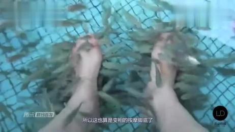 鱼疗时吃脚皮的小鱼会吃肉吗?老外实验亲测,结果触目惊心!