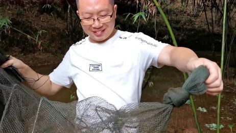 野钓时在河里下地笼子,收获几只小龙虾,又去田角抓了几只