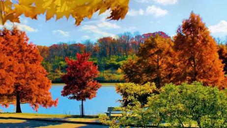 风语一首伤感情歌《落叶的秋天》好听极了
