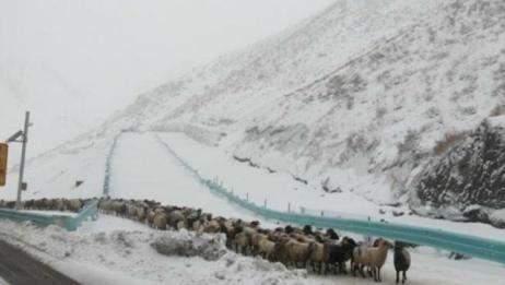 伊犁等多地出现暴雪,温度下降剧烈迎下半年以来气温新低