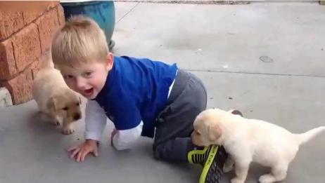 这个小狗狗太懂事了,小宝宝哭闹不停,小狗狗开始照顾起了小宝宝好有爱