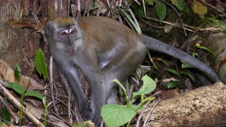 """属猴人""""命最好""""和""""命最苦""""出生年份,不要骗自己了,是真的!"""