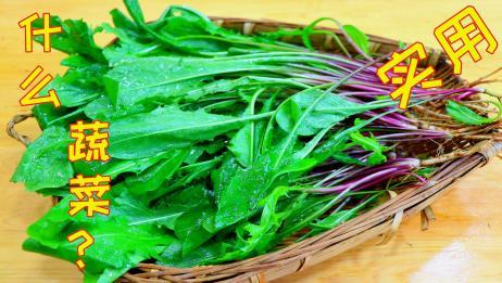 农村最常见的这种野菜,吃起来是鲜美营养清爽,偶尔吃下比肉还香