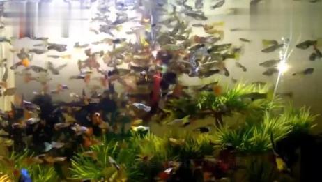 进行鱼疗时,水中的亲亲鱼有多可怕?老外亲测,结果大大出人意料