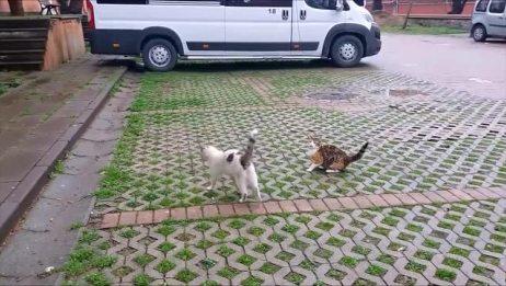 谈恋爱的两只猫咪,让人看了都脸红!