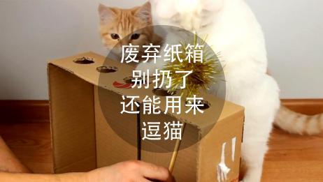 废弃纸箱别扔了,还能用来逗猫