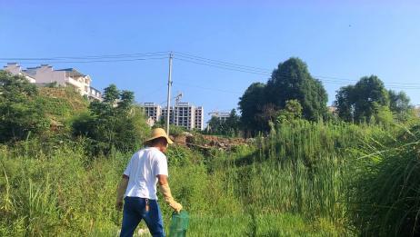 不到一米的小地笼放到水沟里,第二天来收,里面都有些啥?(上)