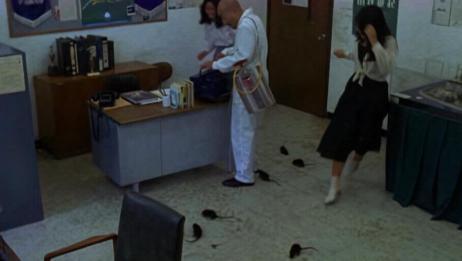 情圣:骗子团伙假装清老鼠的,院长:我这没老鼠,下秒地上好几只