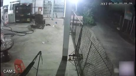 深夜两条狗狗在看家!其中一条发现不对劲及时逃跑,另一条就遭殃了