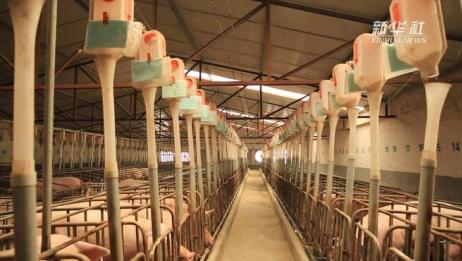 河南稳定生猪生产 保障猪肉市场供应