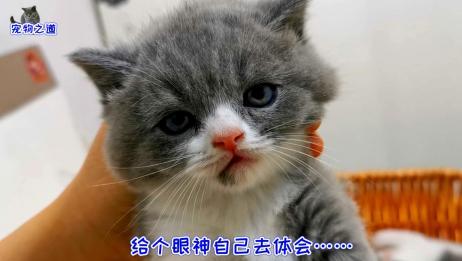 猫姐姐独自看小奶猫,一见逗猫棒立刻变样,搞怪的眼神笑翻主人