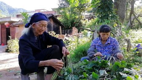 95岁婆婆喜欢吃红薯,二儿媳回村种给老人,看看婆婆如何待儿媳