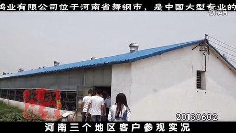 鸽子养殖肉鸽养殖技术,河南客户。