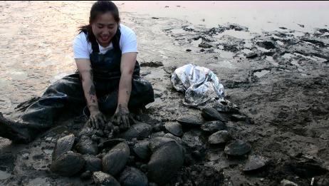 农村虎妞带娃下河挖河蚌,一挖一个真过瘾。全是大货。拿不动了