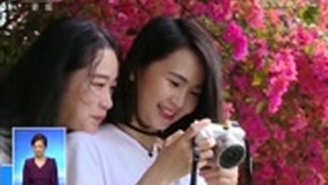 [共同关注]百花盛开 春意盎然·广西南宁 姹紫嫣红三角梅 赏花闻香画中游