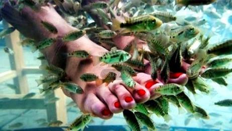 爱吃脚皮的温泉鱼有多可怕,把它们和大鱼放一起,场面触目惊心!