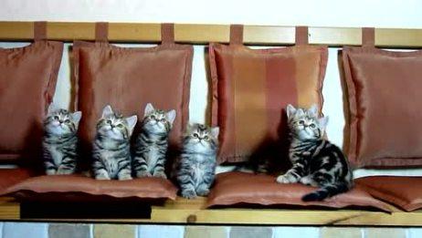 家里的小猫咪动作一致的摇头晃脑,简直就是一个模子里刻出来的