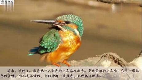 12搭船的鸟课文朗读