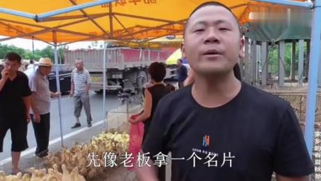 农村小伙准备投资养大鹅,市场上鹅苗卖多少钱一只,朋友直言真便宜