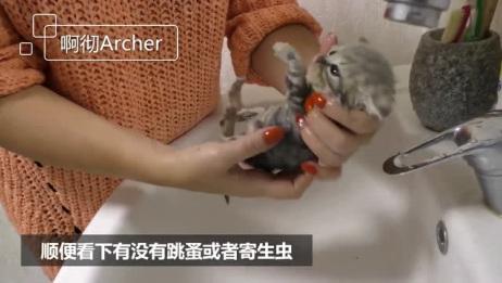 捡到一只被遗弃的流浪小奶猫,带回家洗澡后,原来长得这么好看