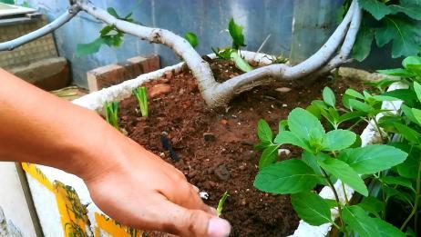 """盆栽蔬菜长""""虫""""?这才是万能杀虫药!不花钱,蚜虫蜗牛都跑掉!"""