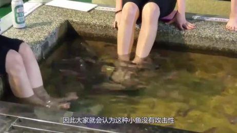 做鱼疗的温泉鱼有多恐怖?老外用活鱼亲测,下一秒意外发生了!