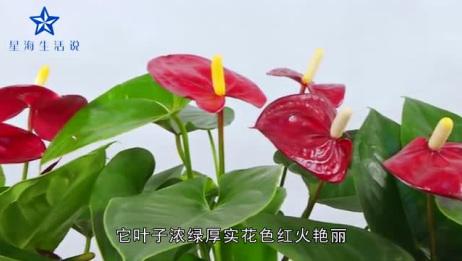 这5种花最合适家里养,寓意美好,春天养上一盆,旺宅迎好运!