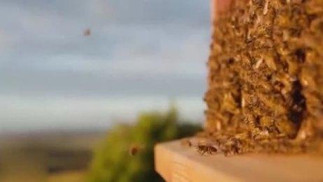 千万投资!养蜂大叔黑科技无限获取蜂蜜