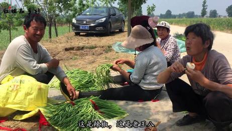 河南的晚蒜苔下来了,多少钱一斤?听老板说完,你相信吗?