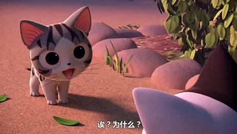 甜甜私房猫:大黑带着小奇参加音乐聚会。