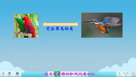 三年级语文上册《15搭船的鸟》课文讲解视频