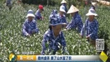 [第一时间]第一时间看春茶·赣州虔茶 美了山水富了农