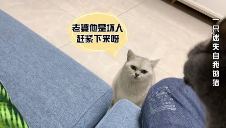 疫情期间小伙子到朋友家撸猫,却误认为第三者,网友:放开那只猫