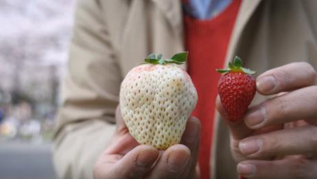日本天价水果,奢侈的价格让人咋舌,这辈子是吃不起了