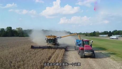 好消息!农民千万不要着急去卖粮食,不久之后玉米价格将会上涨!