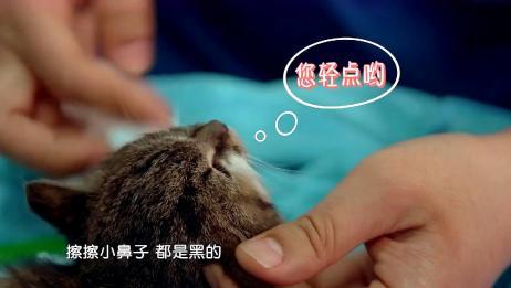 小姐姐捡了一只流浪猫,带到医院检查时,小奶猫咬着被子就不松口